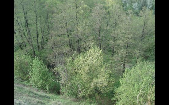 р.Царица 2012